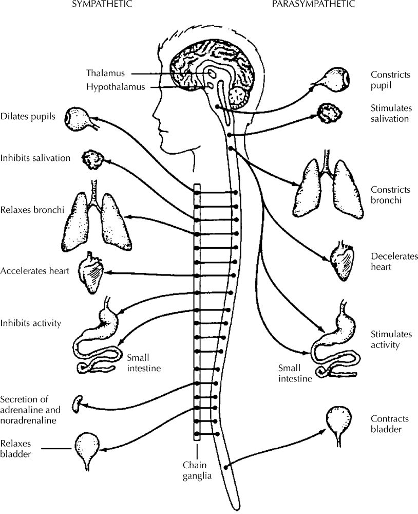 Pin Function72 Pdf Nervous System Structures72 Neuron