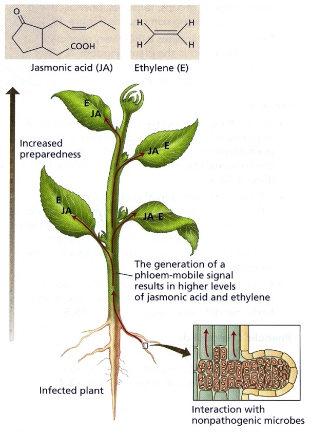 plant defense mechanisms essay A nato advanced study institute on active defence mechanisms in plants was held at cape sounion, greece, 21 april - 3 may 1981 it succeeded a similar institute held at porte conte, sardinia in 1975 on specificity in plant diseases.